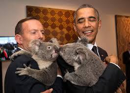 koalas2